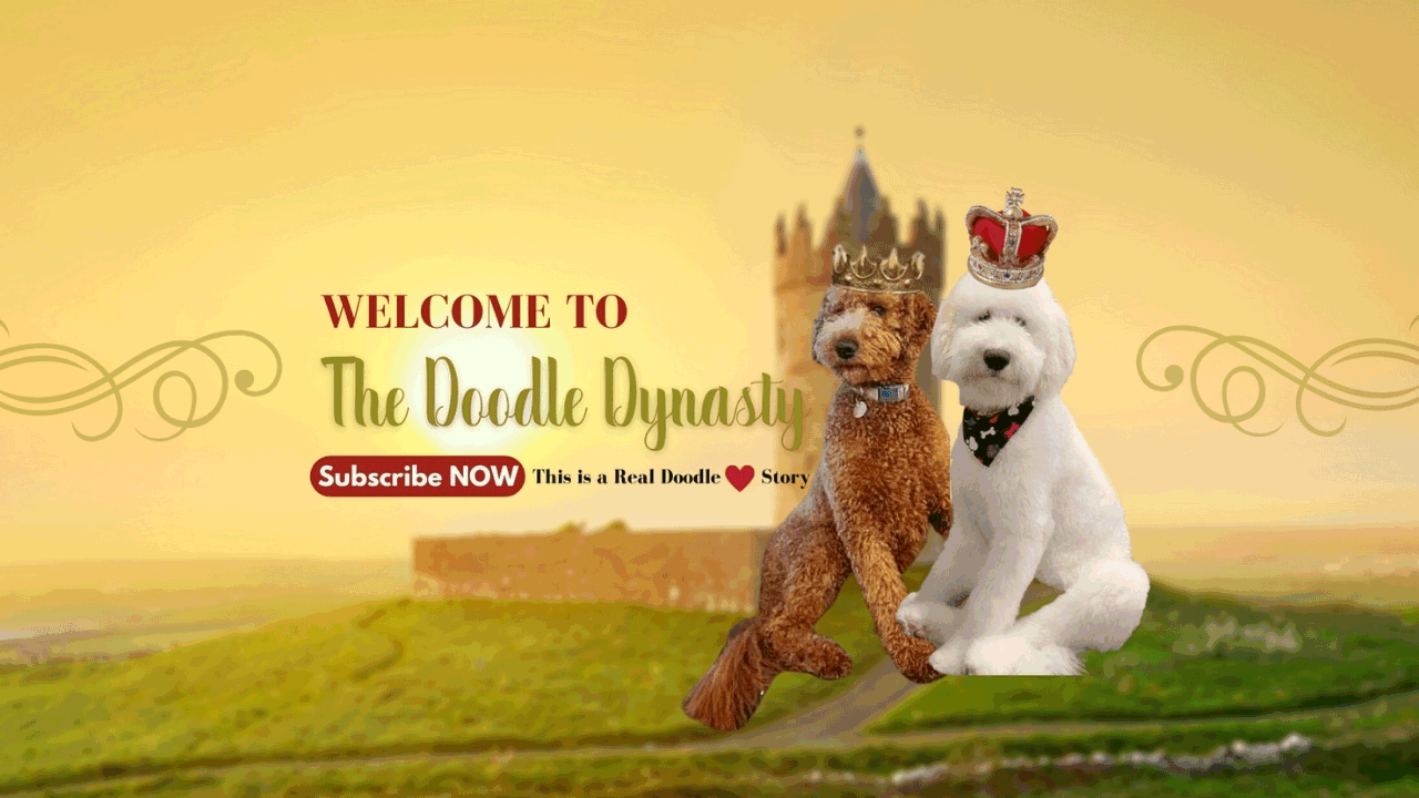 """Image text: """"Labradoodle doodle dynasty"""". Image by our Goldendoodles breeder."""