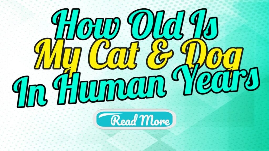 how old is my cat and dog in human years
