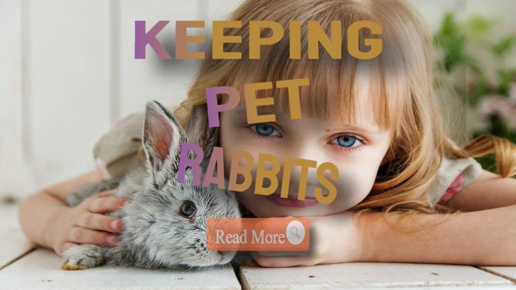 keeping pet rabbits template